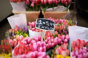 The famous Amsterdam flower market (Bloemenmarkt). Multicolor tulips. The Symbol Of The Netherlands. Diversity.